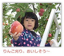 りんご刈り、おいしそう~